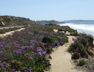 Walking Path on Bluffs in Del Mar