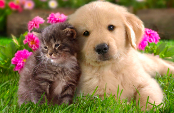 Dog cat boarding places to take your pets while on for Dog daycare santa monica