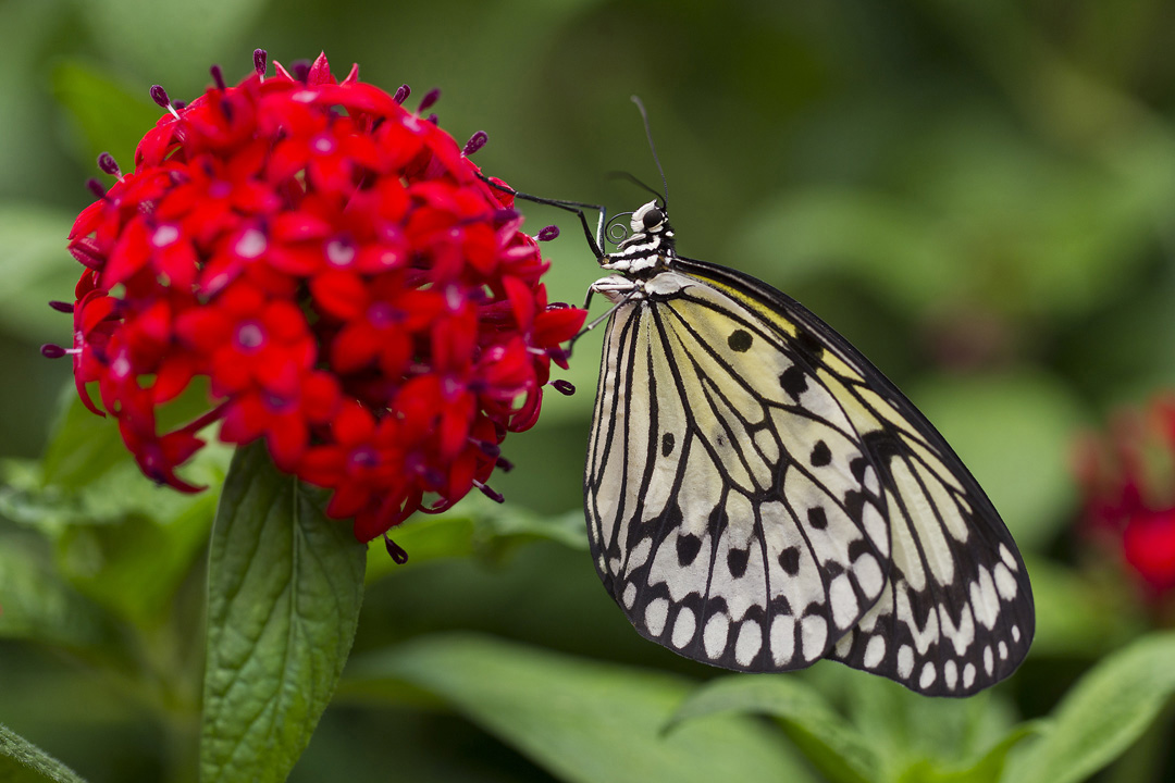10 Reasons to See Butterfly Jungle at the San Diego Zoo ...