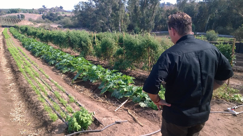 Chef Jeff Campagna looking out at rows of vegetables