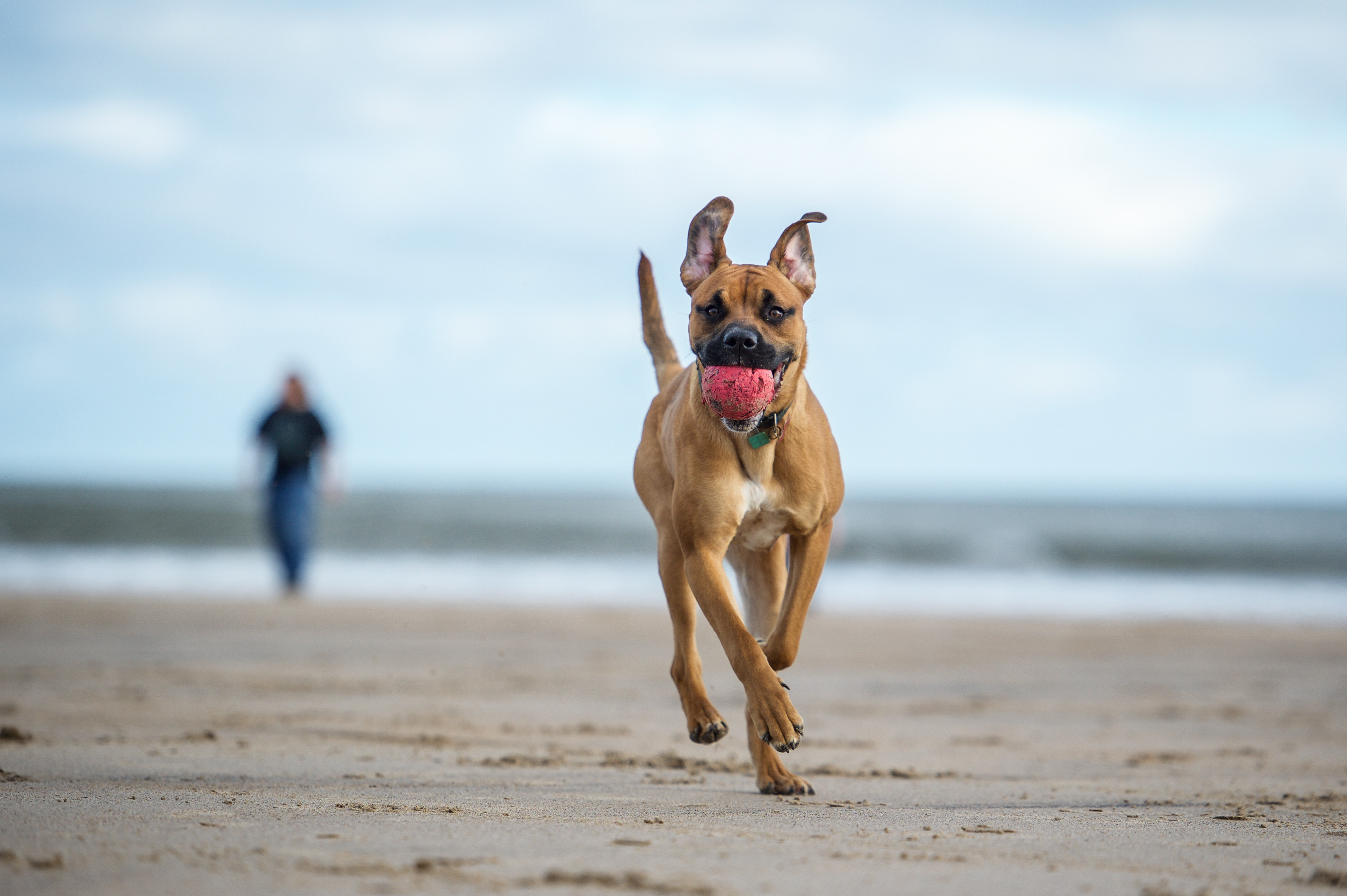 30 Dog Parks Friendly Beaches In San Go North County 2018 Guide Ync