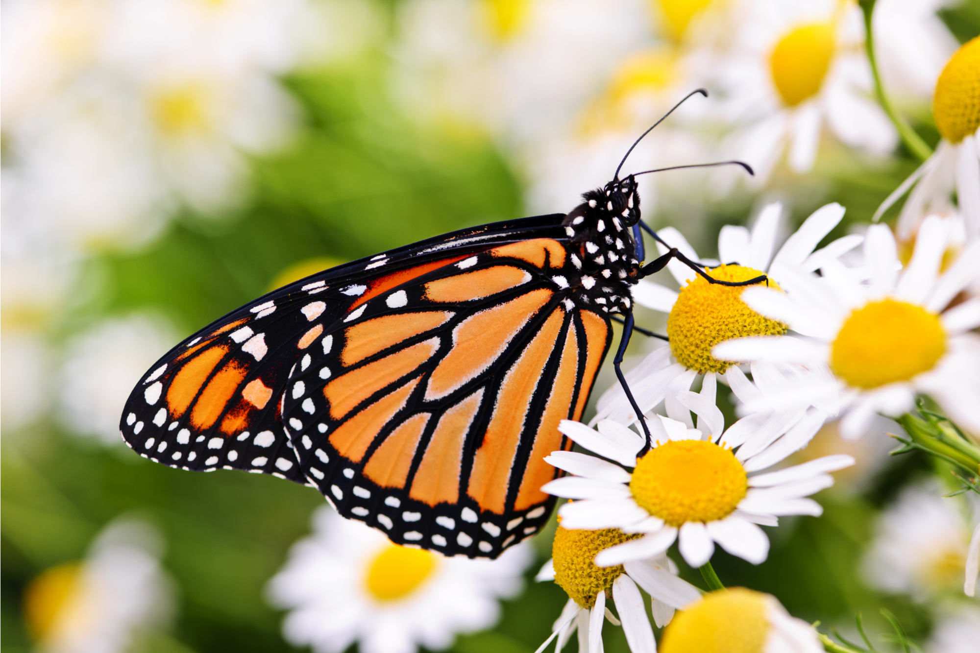 fun things to do in san diego with kids butterfly farms